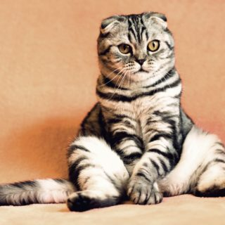 Katze guckt