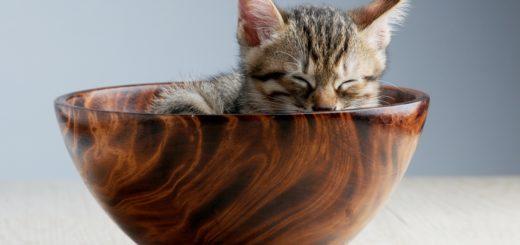Katze in Schissel